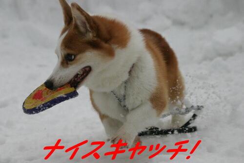 125_25441